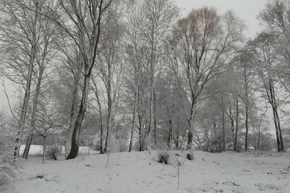 Winter haze, snow days...life goes on! (4/6)