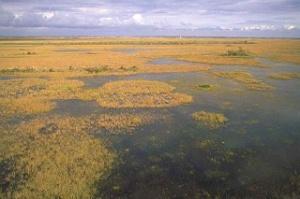 marsh[1]