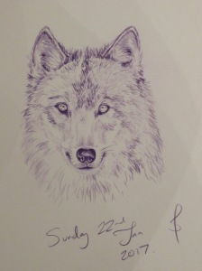 Wolf study in purple by Sophie E Tallis