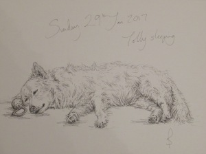 Pen & Ink drawing of my dog, Tolly by Sophie E Tallis